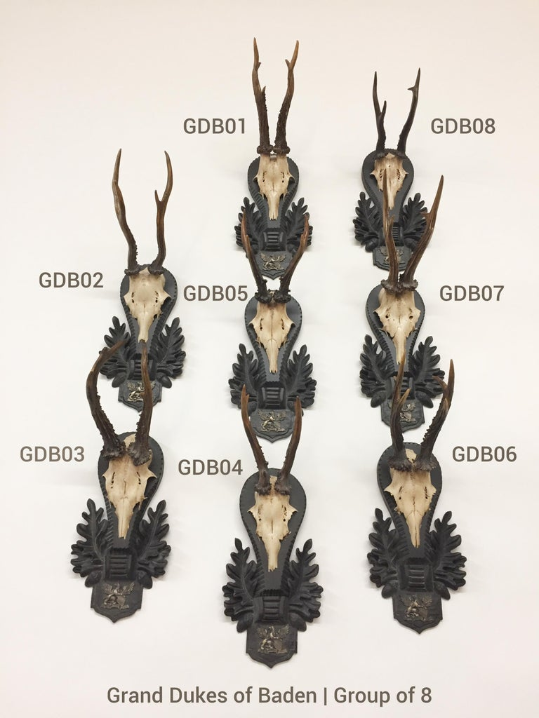 An extraordinary grouping of antique Roe trophies attributed to The Grand Dukes of Baden. Each trophy is mounted on an original, hand carved Black Forest plaque. Mounted on the bottom of each plaque, just below the CAP is the wappen of the Grand