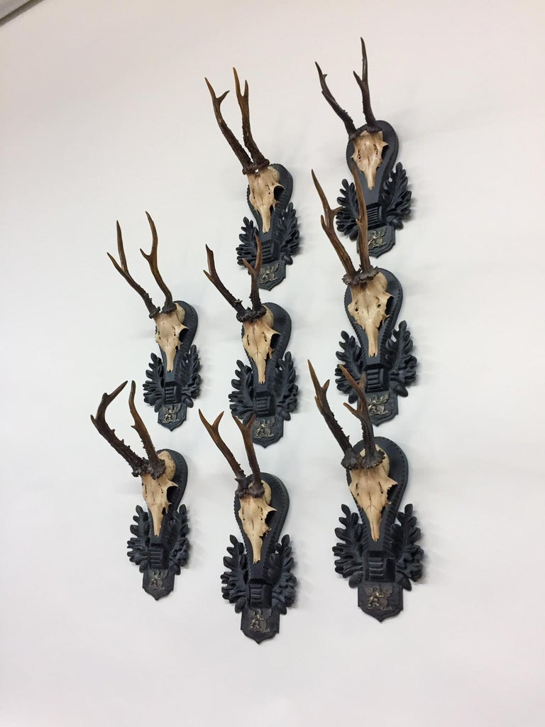 Antique German Black Forest Roe Trophies of the Grand Dukes of Baden In Good Condition For Sale In Houston, TX