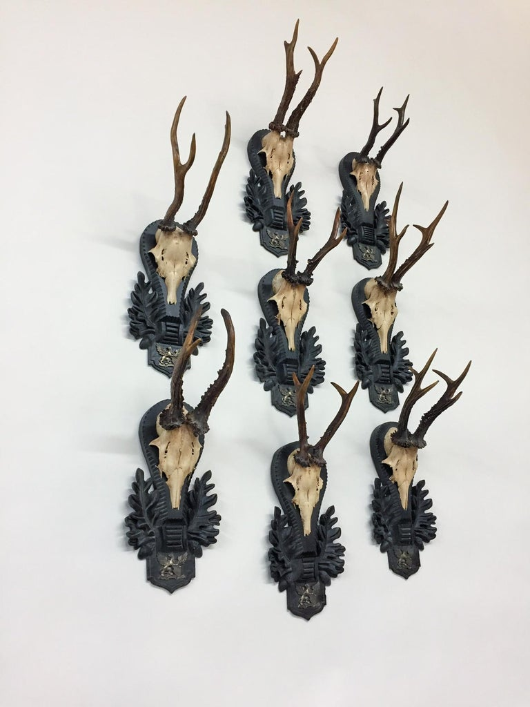 19th Century Antique German Black Forest Roe Trophies of the Grand Dukes of Baden For Sale