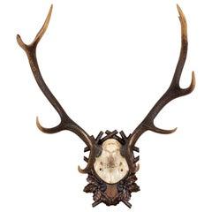 Antique Habsburg Red Stag Trophy of Emperor Franz Josef from Eckartsau Castle