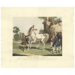 Antique Horse Print of the Darley Arabian by Gambart, circa 1900