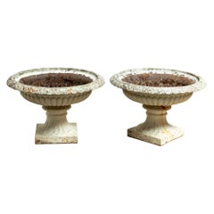 Antique Large Pair of 19th Century English Cast Iron Tazza Urns