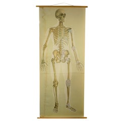 Antique Linen Skeleton School Poster, 1920s