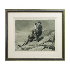 Antique Lion Etching, 'The King' by Herbert Dicksee, African Wildlife