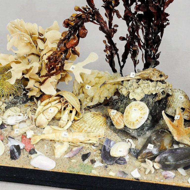 Antike natürliche Wunderkammer unter der Wasserschule Probe 2
