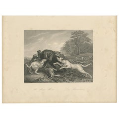 Antique Print of a Bear Hunt by Payne 'c.1860'