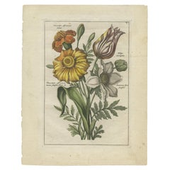 Antique Print of a Bouquet with Feverfew, Tulip and Anemone by Elwe '1794'