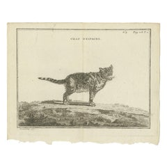 Antique Print of a Calico Cat by Fessard, 1819