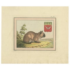 Antique Print of a Cat by Geissler 'c.1820'