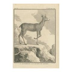 Antique Print of a Deer Species by Buffon '1782'