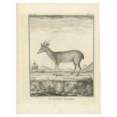 Antique Print of a Deer Species by Fritzsch, c.1780