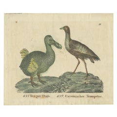 Antique Print of a Dodo and Trumpeter Bird '1834'