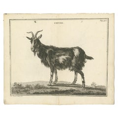 Antique Print of a Goat by Fessard, 1819