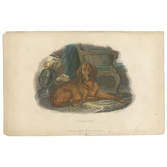 Antique Print of a Hound Dog by Pittman, 'circa 1835'