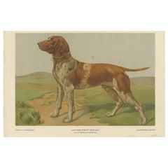 Antique Print of a Hound Dog by Th. Breidwiser, 1879