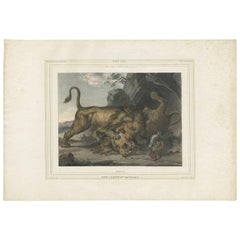 Antique Print of a Lion Fight Made After Raden Saleh, circa 1860