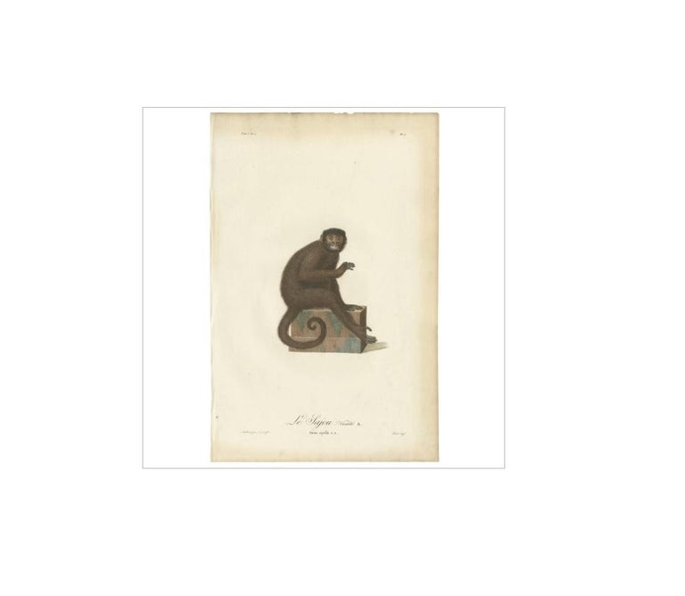 18th Century Antique Print of a Monkey by J.B. Audebert, circa 1798 For Sale