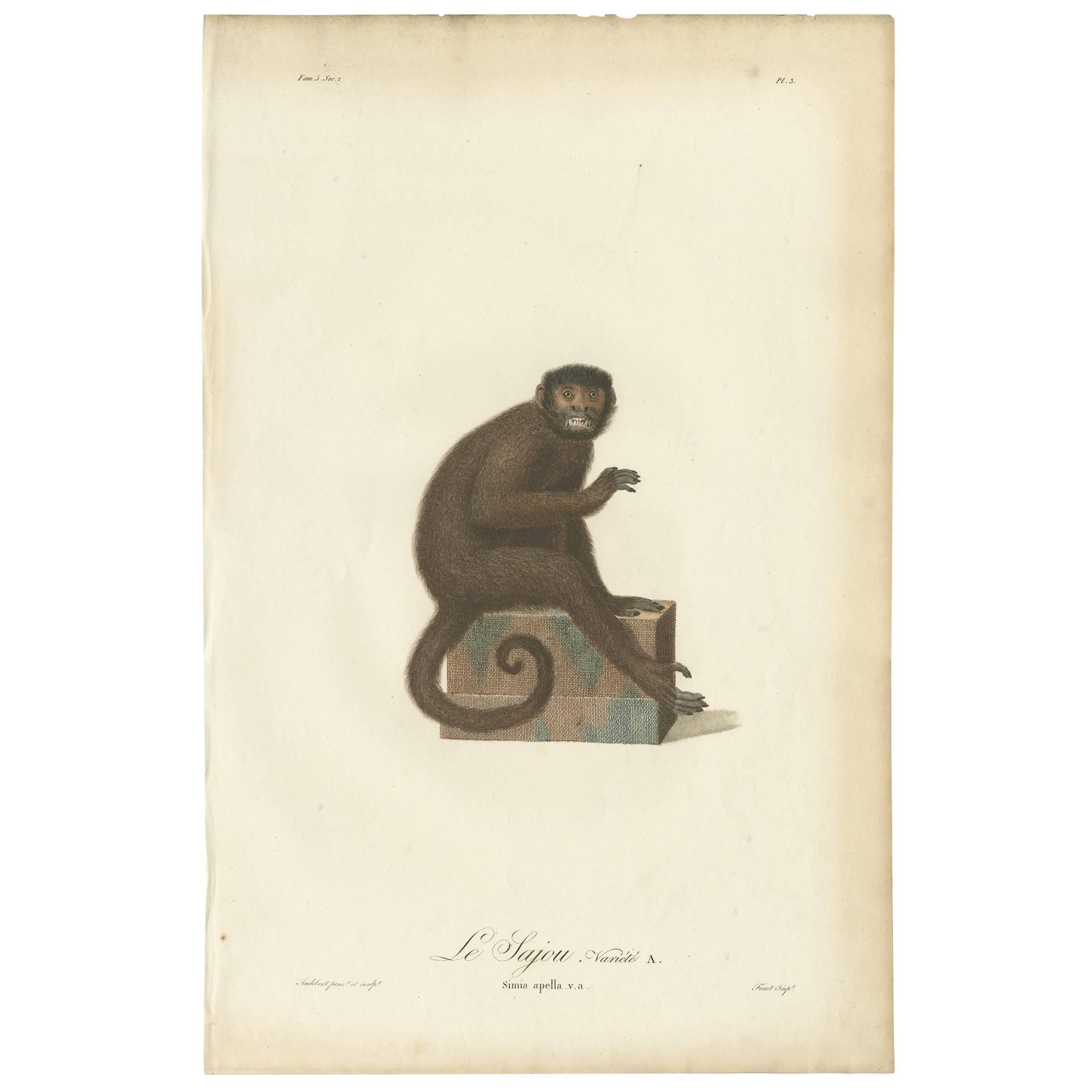 Antique Print of a Monkey by J.B. Audebert, circa 1798