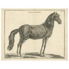 Antique Print of a Navarrin Horse by Fessard, 1819