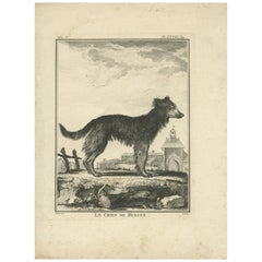 Antique Print of a Sheepdog by De Seve, c.1780