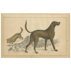 Antique Print of a Skye Terrier and Bloodhound by Fullarton, circa 1850