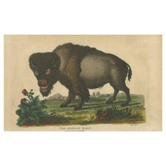 Antique Print of an American Bison by Wilkes, 1796