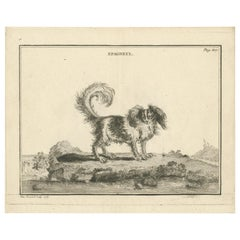 Antique Print of an 'Epagneul' Dog by Fessard, 1819