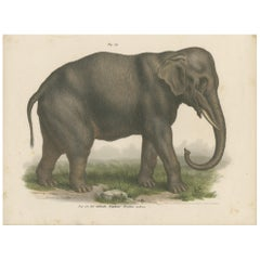 Antique Print of an Indian Elephant by FItzinger, 1860