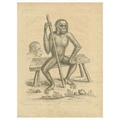 Antique Print of an Orangutan Seated on a Bench by Edwards, 1757