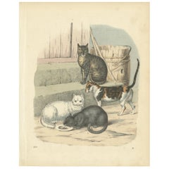 Antique Print of Cats by Hoffmann '1860'