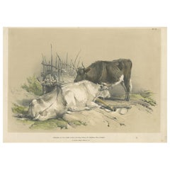 Antique Print of Cattle and a Cart by Ducôte, circa 1840