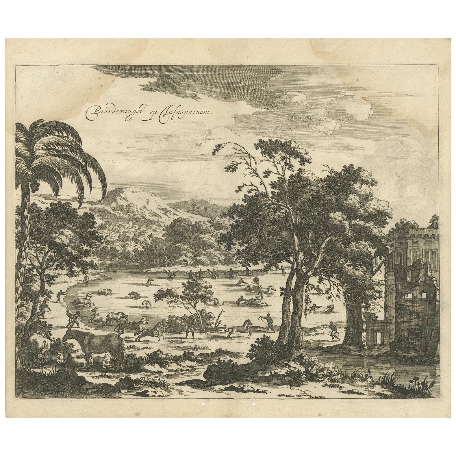 Antique Print of Horse Catching in Ceylon/Sri Lanka by P. Baldaeus (1672)
