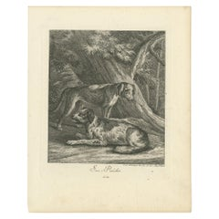 Antique Print of Hunting Dogs by Ridinger 'c.1760'