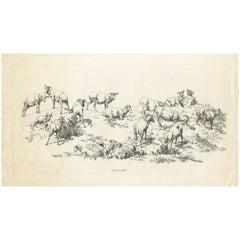 Antique Print of Sheep by Robert Hills, 1802