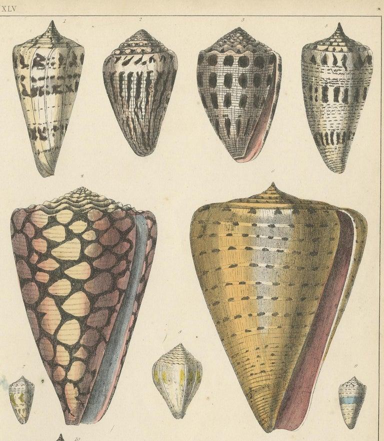 English Antique Print of Shells by Fullarton, circa 1850 For Sale