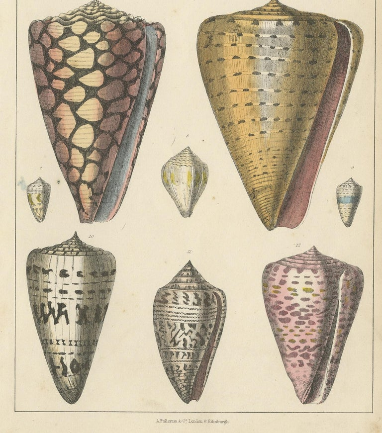 Antique Print of Shells by Fullarton, circa 1850 In Good Condition For Sale In Langweer, NL