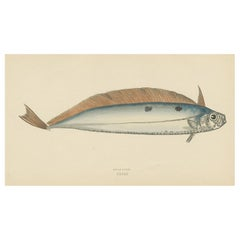 Antique Print of the Dealfish by J. Couch, circa 1870