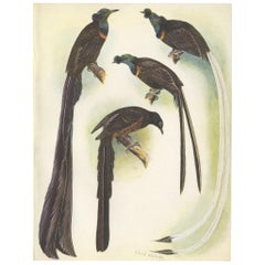 Antique Print of the Princess Stephanie's Bird Paradise and Others, 1950
