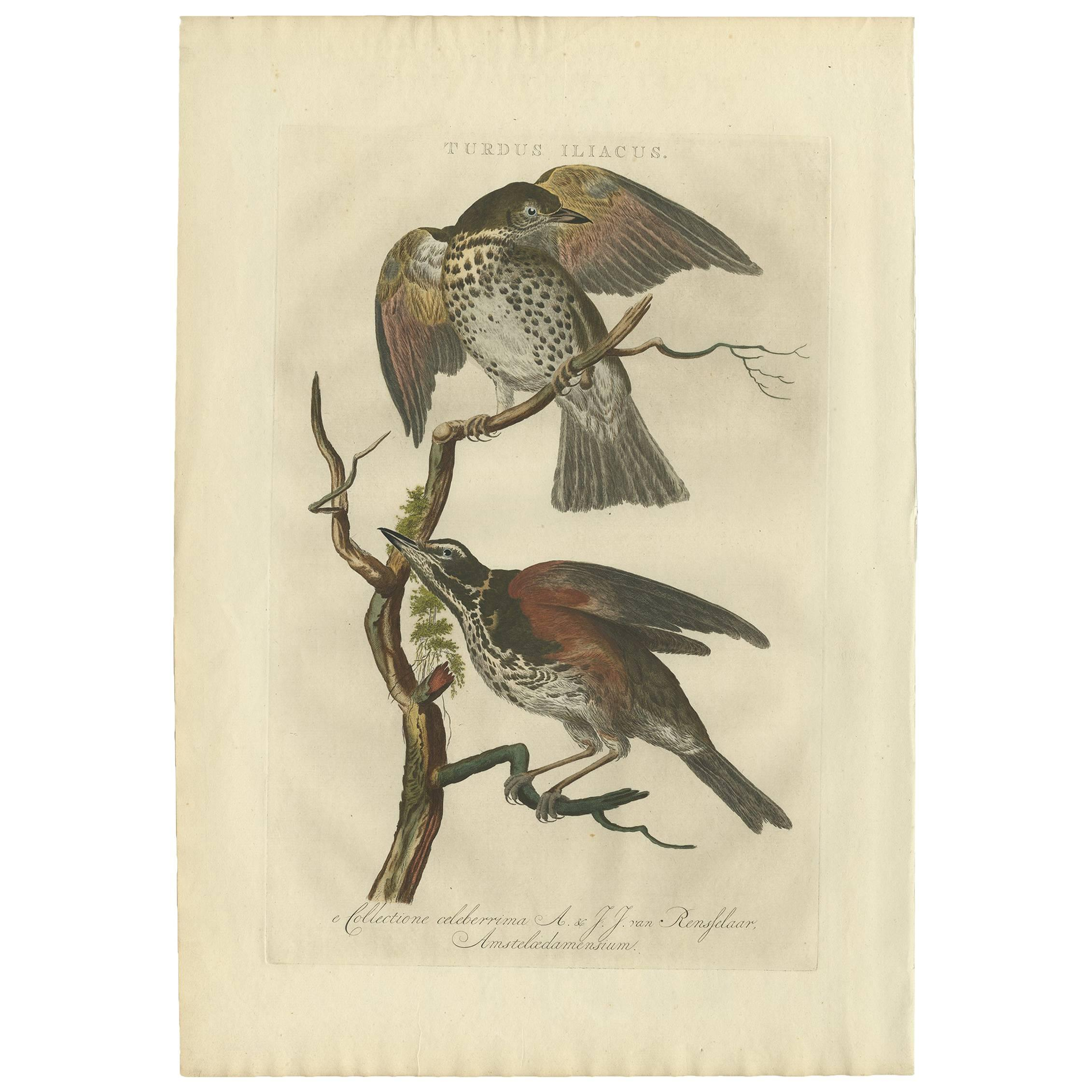 Antique Print of the Redwing Bird by Sepp & Nozeman, 1770