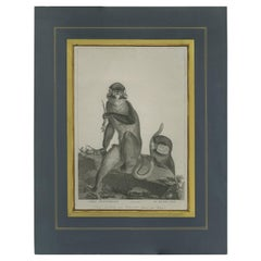 Antique Print of the White-Nosed Monkey by Miger 'c.1808'