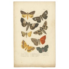 Antique Print of Various Butterflies and Moths by Boisduval, 1836