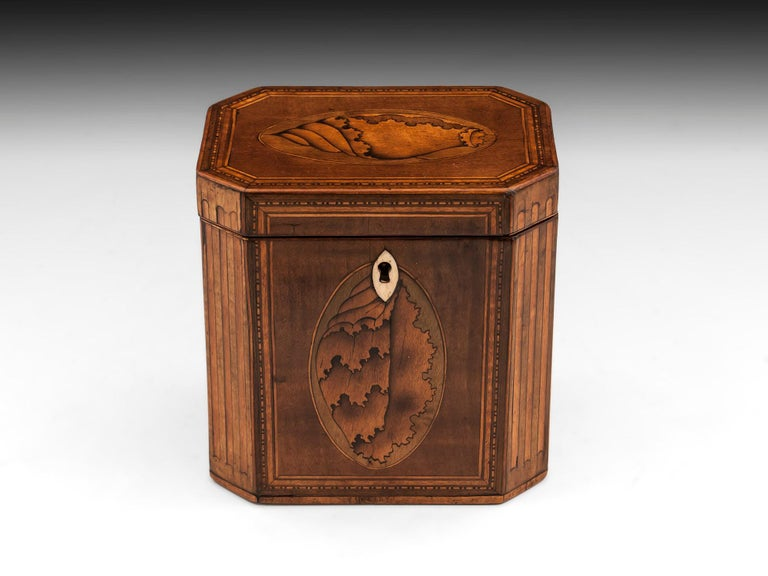 Antique octagonal harewood tea caddy with beautiful inlaid conch shell ovals to the front and top and satinwood ovals to the sides. With fluted boxwood and faded green sycamore cants on all four sides and bone diamond shape escutcheon.   The