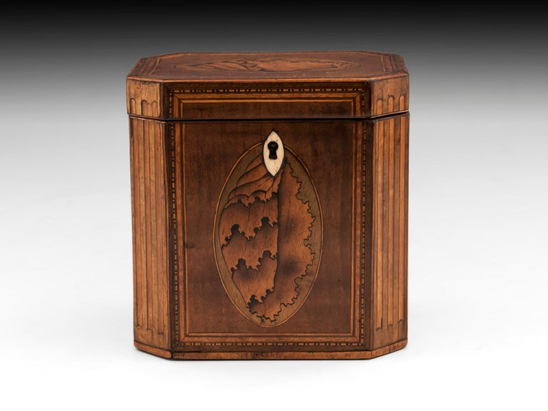 George III Antique Shell Inlaid Harewood Tea Caddy, 18th Century For Sale
