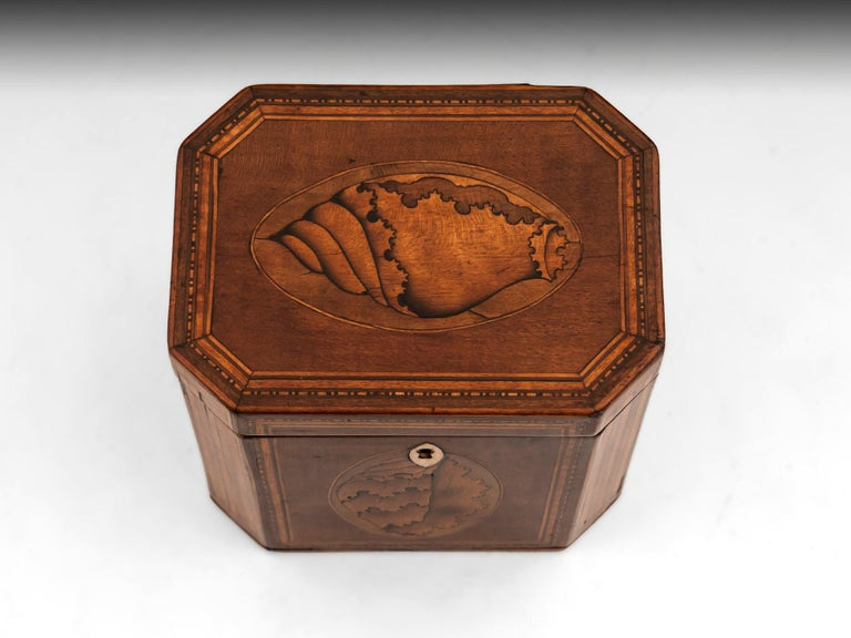 British Antique Shell Inlaid Harewood Tea Caddy, 18th Century For Sale