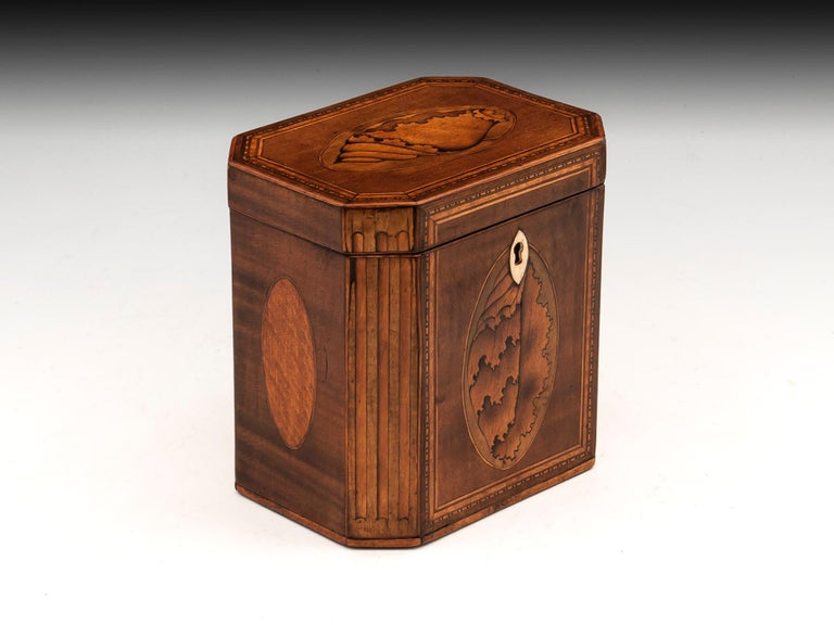 Antique Shell Inlaid Harewood Tea Caddy, 18th Century In Good Condition For Sale In Northampton, United Kingdom