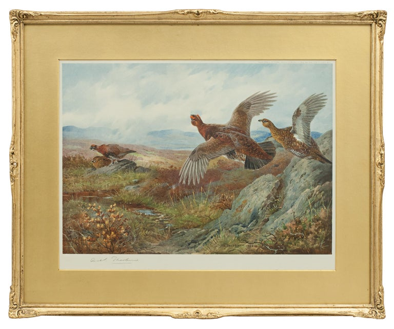 A game bird colotype print by Archibald Thorburn, titled 'Summer'. This is a single picture from a set of four called 'The Seasons'. Each season is represented by a bird, Partridge - Spring, Pheasant - Autumn, Grouse - Summer, Black Game - Winter.