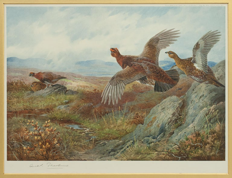 Sporting Art Antique Shooting Picture Game Birds by Archibald Thorburn 1927 For Sale