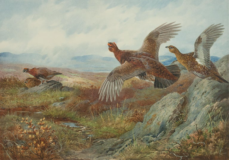 British Antique Shooting Picture Game Birds by Archibald Thorburn 1927 For Sale