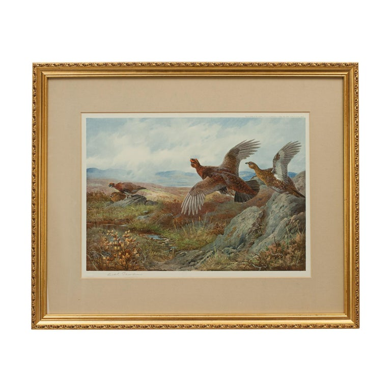 Sporting Art Antique Shooting Print, the Seasons by Archibald Thorburn, Summer, Grouse For Sale