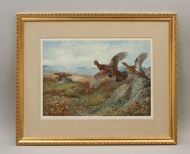 English Antique Shooting Print, the Seasons by Archibald Thorburn, Summer, Grouse For Sale